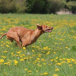 Fitness voor honden